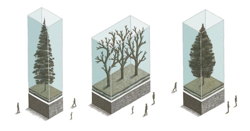 E' l'individualismo di un albero scarno che vuole mettersi in mostra, perché non si sente mai abbastanza apprezzato